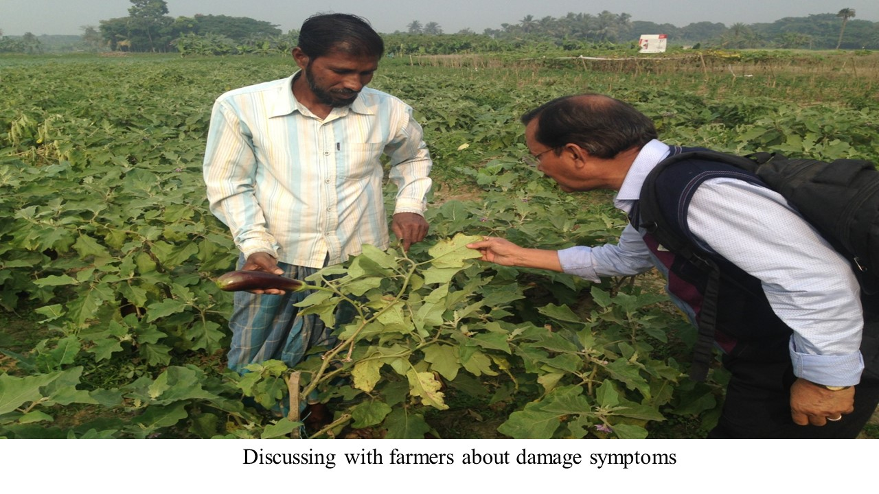 Discussing with farmers about damage symptoms